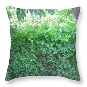 Camera Peak Thru Nature Buy Faa Print Products Or Down Load For Self Printing Navin Joshi Rights Man Throw Pillow