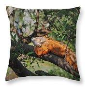 25- Iguanas Throw Pillow