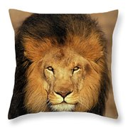 Lion Dafrique Panthera Leo Throw Pillow