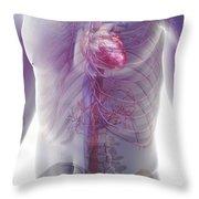The Cardiovascular System Throw Pillow