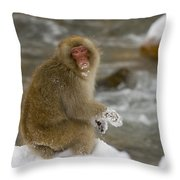 Japanese Macaque Throw Pillow