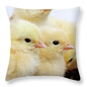 Poussin Throw Pillow