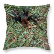 Edzna In Campeche Throw Pillow
