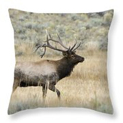 2nd To None Throw Pillow