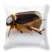 Cockchafer Or June Beetle  Throw Pillow