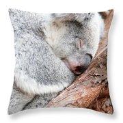 Adorable Koala Bear Taking A Nap Sleeping On A Tree Throw Pillow