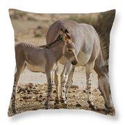 African Wild Ass Equus Africanus Throw Pillow
