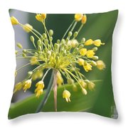 Allium Flavum Or Fireworks Allium Throw Pillow