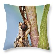 Antlion 31 Throw Pillow