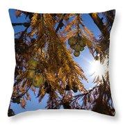 Autumn Coniferous Throw Pillow