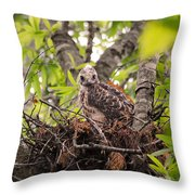 Baby Red Shouldered Hawk In Nest Throw Pillow