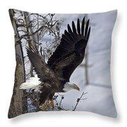 Bald Eagle   #8309 Throw Pillow