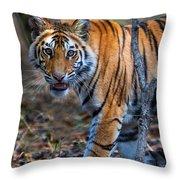 Bengal Tiger Panthera Tigris Tigris Throw Pillow