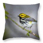 Black Throated Green Warbler Throw Pillow