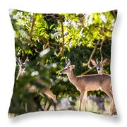 3 Bucks Caught In A Orchard Throw Pillow