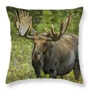Bull Moose In Velvet  Throw Pillow