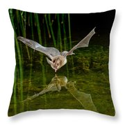 California Leaf-nosed Bat At Pond Throw Pillow