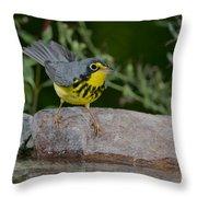 Canada Warbler Throw Pillow