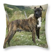 Canary Dog Throw Pillow