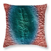 Cell Division, Sem Throw Pillow