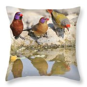 Colorful Birds From Africa Throw Pillow