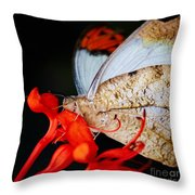 Colorful Portrait Of A Butterfly  Throw Pillow