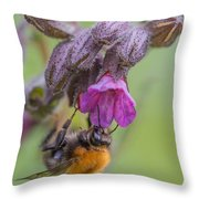 Common Carder Bee Throw Pillow