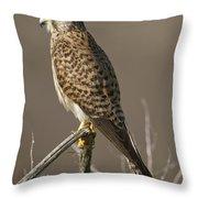 Common Kestrel Falco Tinnunculus Throw Pillow