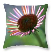 Coneflower Throw Pillow
