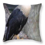 Crested Carara Throw Pillow