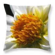 Dahlia Named Alpen Cherub Throw Pillow