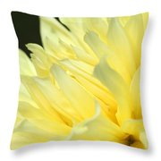 Dahlia Named Kelvin Floodlight Throw Pillow