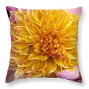 Dahlia Named Lambada Throw Pillow