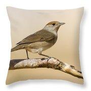 female Eurasian Blackcap Throw Pillow