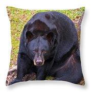 Florida Black Bear Throw Pillow