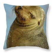 Galapagos Sea Lion Zalophus Wollebaeki Throw Pillow
