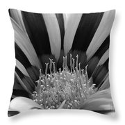 Gazania Named Big Kiss White Flame Throw Pillow