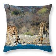 Giraffes Giraffa Camelopardalis Throw Pillow