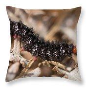 Glanville Fritillary Butterfly Caterpillar - Melitaea Cinxia Throw Pillow