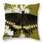 Gold Rim Swallowtail Butterfly Throw Pillow