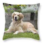 Golden Retriever Dog Throw Pillow