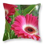Gorgeous Gerbers Throw Pillow
