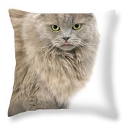 Highland Fold Lilac Self Throw Pillow