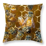 Honey Bees In Hive Throw Pillow