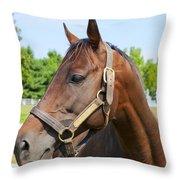 Horse On A Farm  Throw Pillow