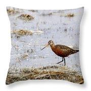 Hudsonian Godwit Throw Pillow