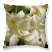 Hyacinth Named City Of Haarlem Throw Pillow