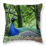 Indian Blue Peacock Throw Pillow