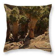 Indian Canyon Throw Pillow