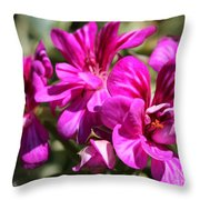 Ivy Geranium Named Contessa Purple Bicolor Throw Pillow